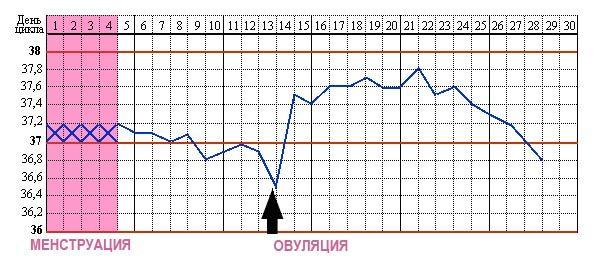 Опрделение овуляции по базальной температуре тела
