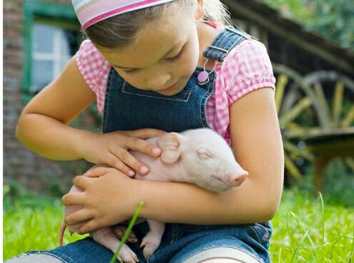 Характер ребенка в год Свиньи