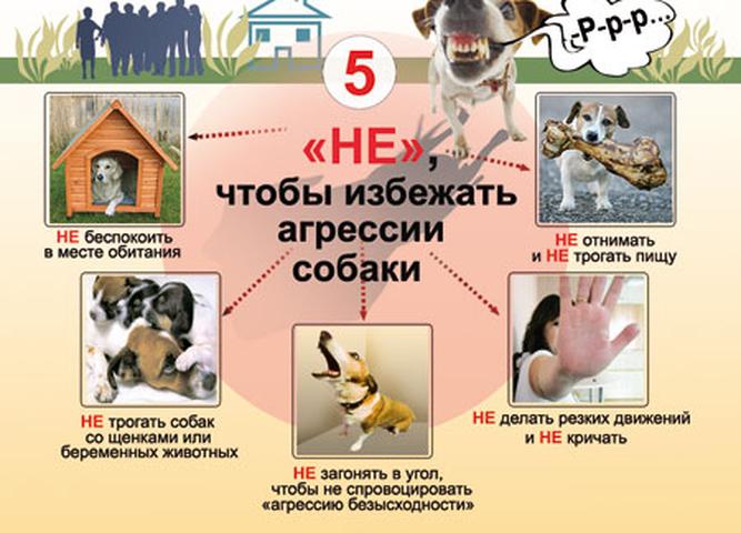 картинки правила поведения с бездомными животными вспоминаем